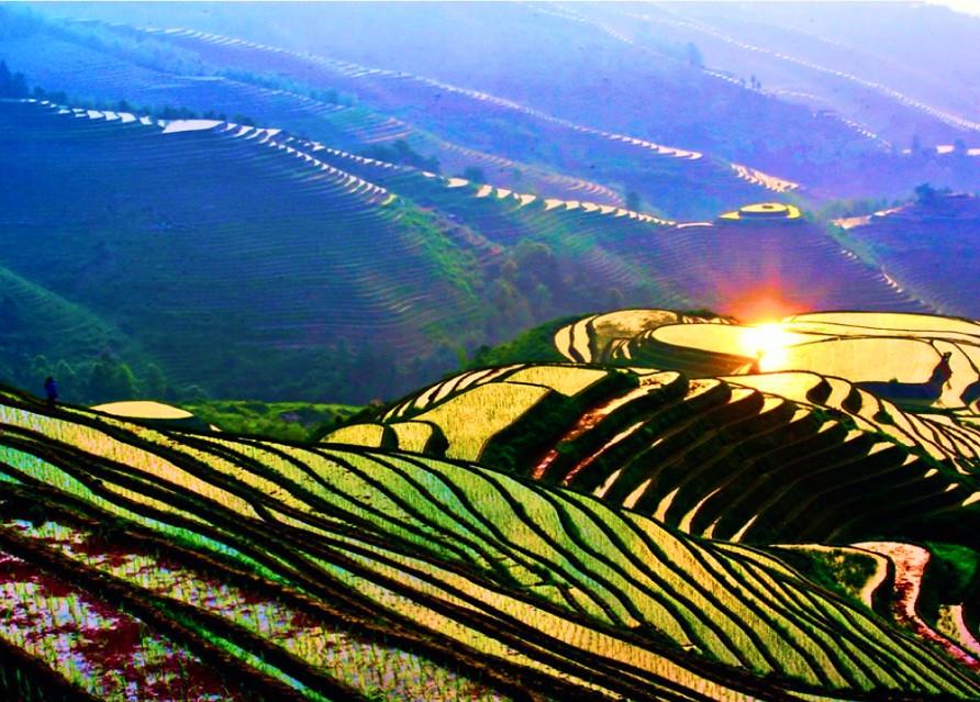 Рисовые террасы Хребет Дракона